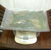 50 grams of dried soursop leaves 2
