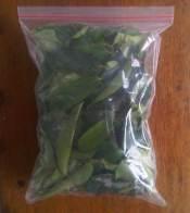 soursop-leaves