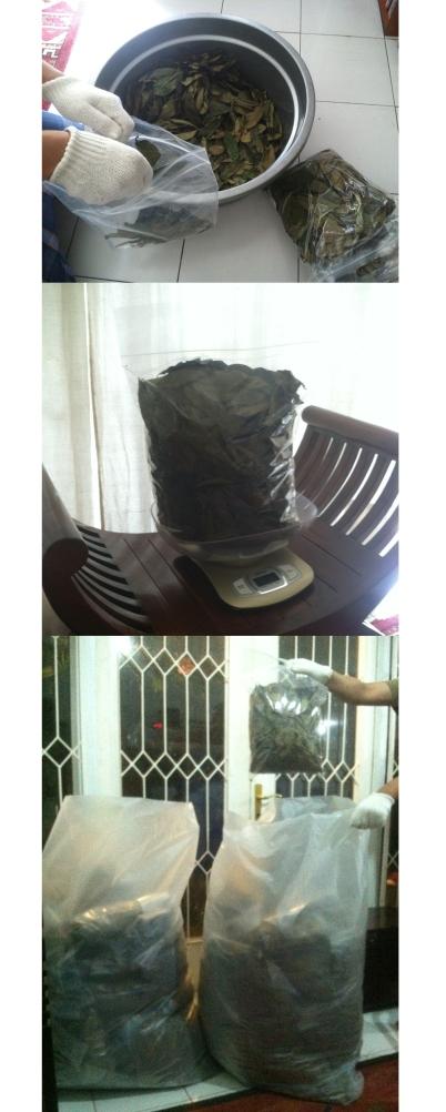 200-grams of dried soursop leaves