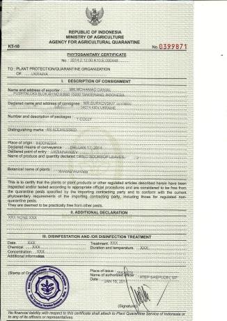 Phytosanitary doc-Kiev