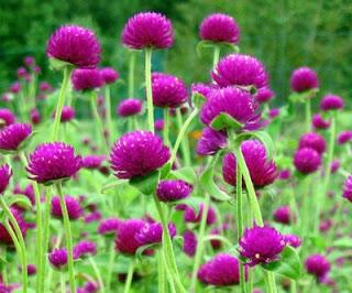 bunga-bugang